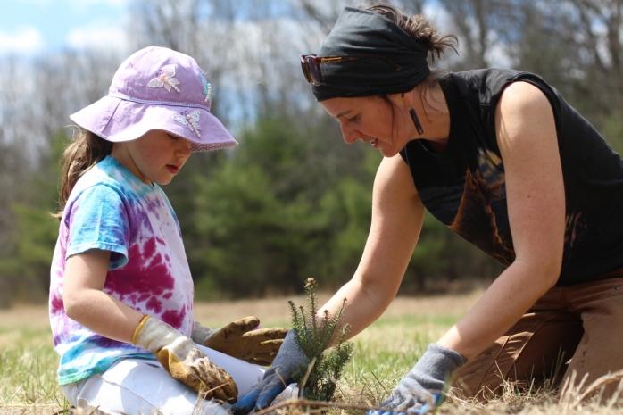 plantin trees