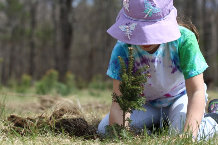 plantin trees too